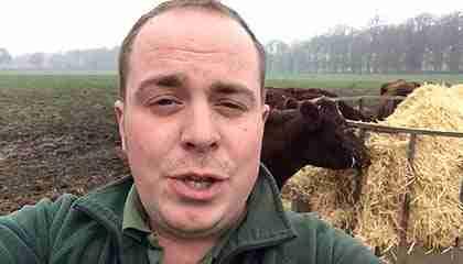 has-zeus-the-bull-done