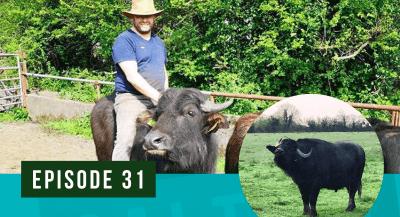 farmer riding buffalo