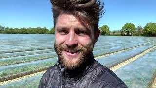 Farmer Jack in field of carrots