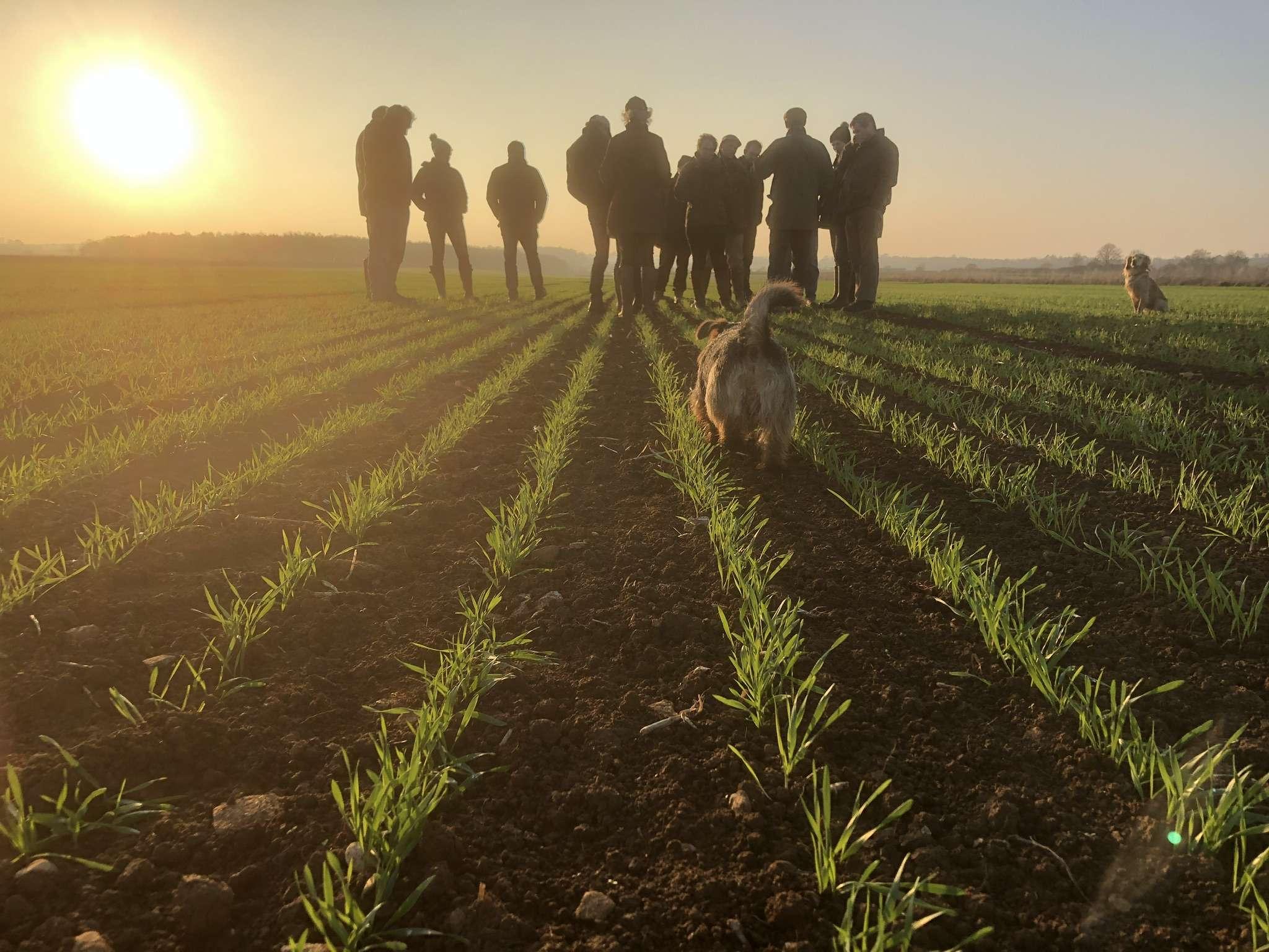 Farmers inspecting crops in a field