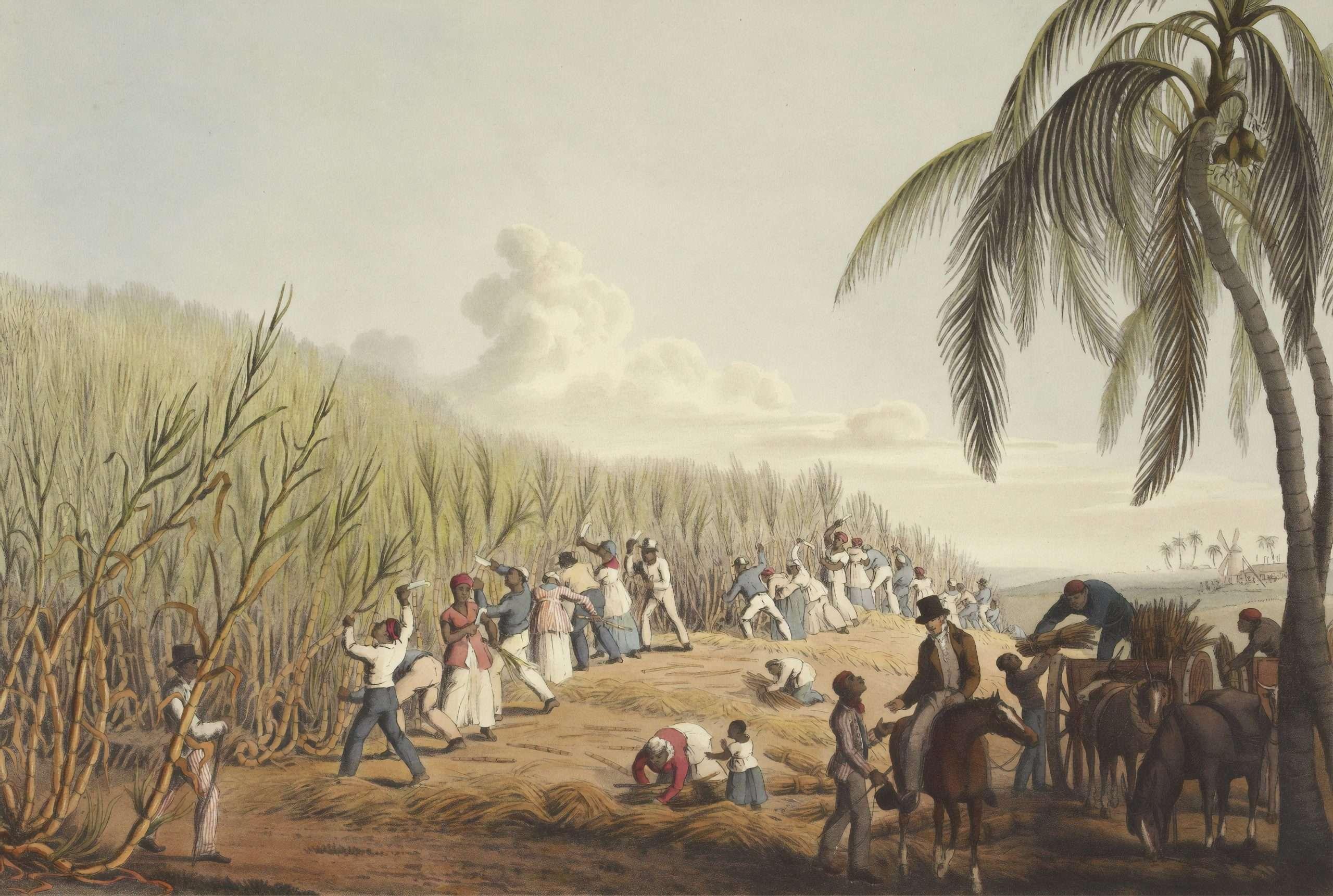African slaves on a sugar plantation