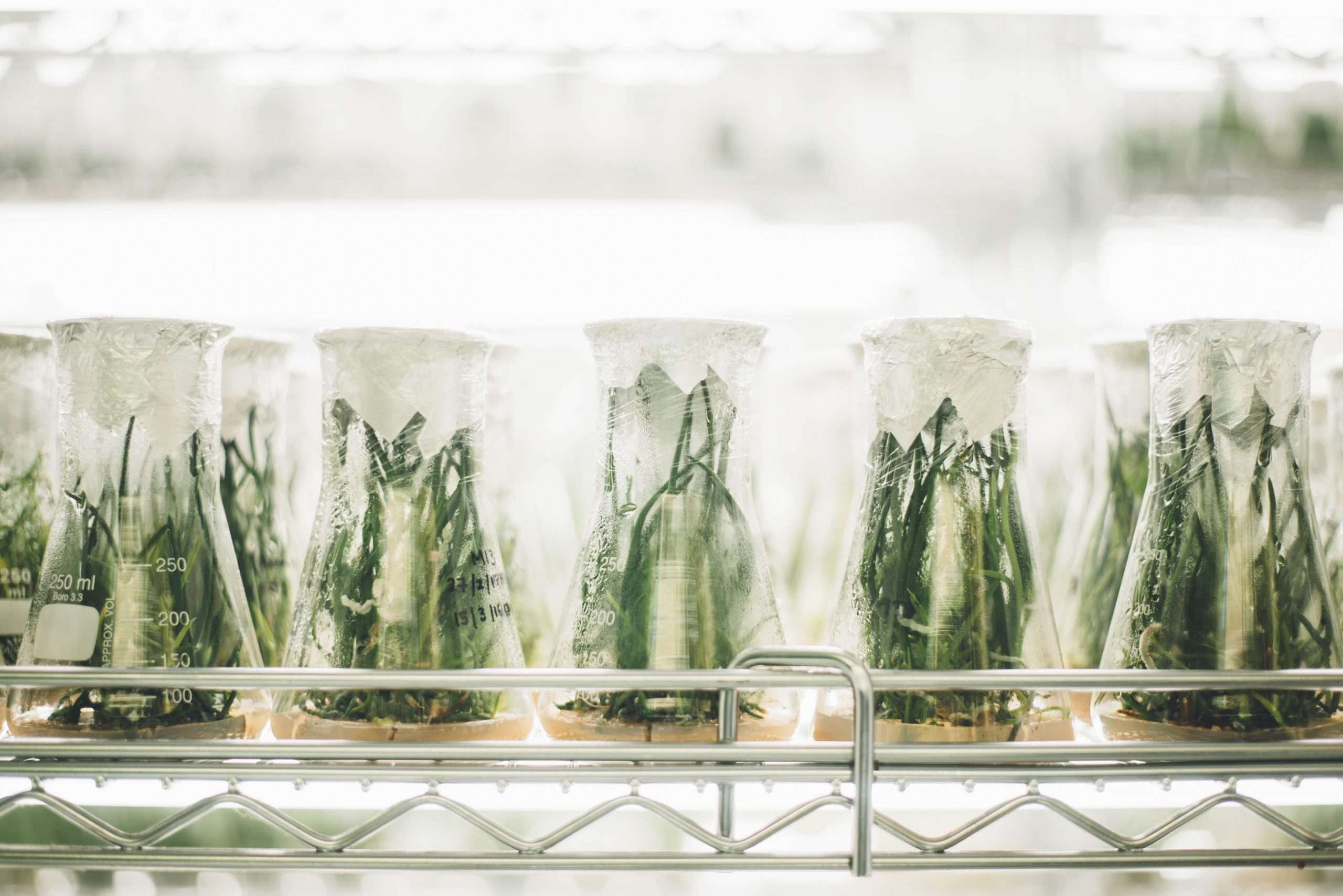 Plants in test tubes