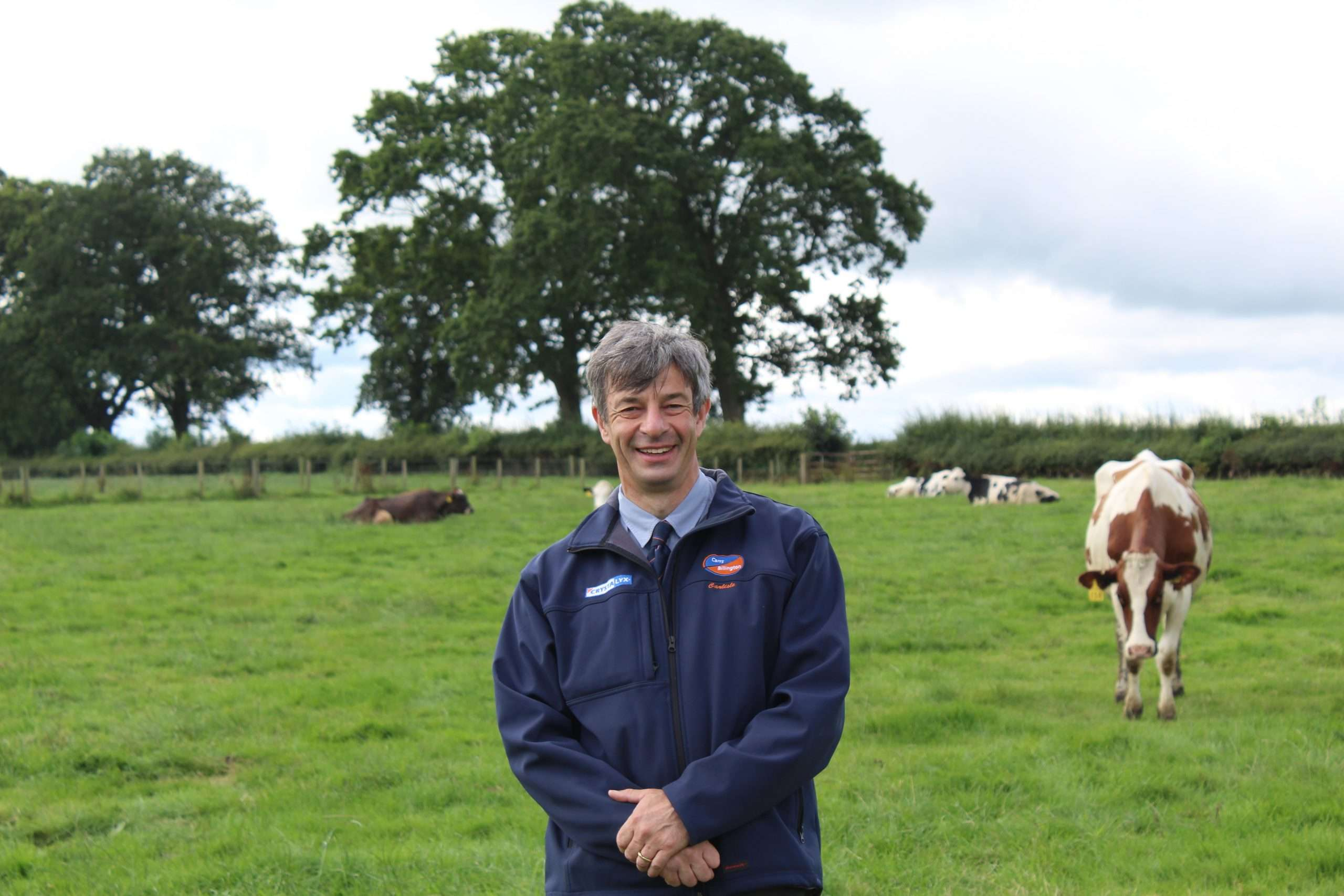man in field of dairy cows